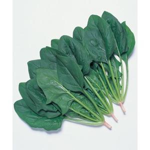野菜の種/種子 サマースカイR7・ほうれんそう ほうれん草 法蓮草 M・3万粒 (大袋)タキイ種苗|vg-harada