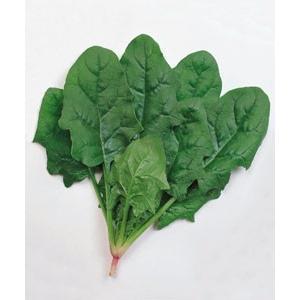 野菜の種/種子 メガトン・ほうれんそう ほうれん草 法蓮草 1L (大袋)タキイ種苗 vg-harada