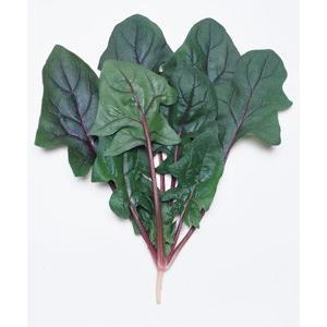 野菜の種/種子 早生サラダあかり・ほうれんそう ほうれん草 法蓮草 1L (大袋)タキイ種苗|vg-harada