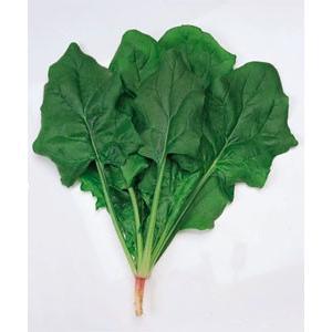 野菜の種/種子 トライ・ほうれんそう ほうれん草 法蓮草 1dl (メール便可能)タキイ種苗|vg-harada