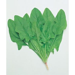 野菜の種/種子 次郎丸(針種)・ほうれんそう ほうれん草 法蓮草 80ml (メール便可能)タキイ種苗|vg-harada