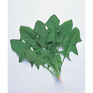 野菜の種/種子 日本(針種)・ほうれんそう ほうれん草 法蓮草 1L (大袋)タキイ種苗|vg-harada