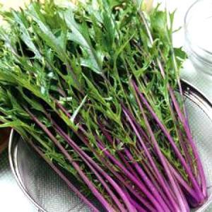 野菜の種/種子 紅法師・水菜 20ml(メール便可能)タキイ種苗|vg-harada