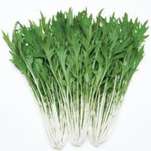 野菜の種/種子 京かなで・水菜 20ml(メール便発送)タキイ種苗|vg-harada