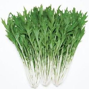 野菜の種/種子 京かなで・水菜 5.5m(メール便発送)タキイ種苗|vg-harada