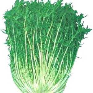 野菜の種/種子 中生 白茎千筋京水菜・水菜 1dl(メール便可能)タキイ種苗|vg-harada