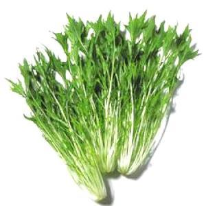 野菜の種/種子 京みぞれ・水菜 ペレット種子 300粒 (メール便発送)タキイ種苗|vg-harada
