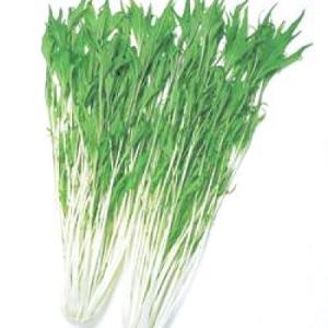 野菜の種/種子 京しぐれ・水菜 20ml(メール便発送)タキイ種苗|vg-harada