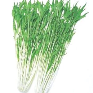 野菜の種/種子 京しぐれ・水菜 2dl缶入 (大袋)タキイ種苗 vg-harada
