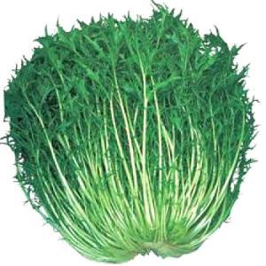 野菜の種/種子 晩生 白茎千筋京水菜・水菜 1dl (メール便可能)タキイ種苗 vg-harada