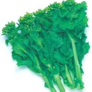 野菜の種/種子 冬華・ナバナ・菜花 2dl袋入(大袋)タキイ種苗 vg-harada