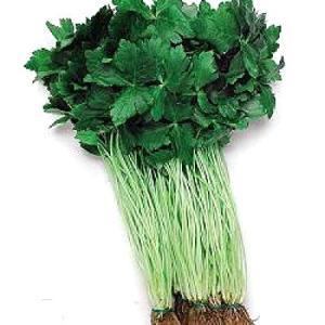 野菜の種/種子 白茎三ツ葉(関西系)・ミツバ・三ツ葉 1dl(メール便可能)タキイ種苗|vg-harada