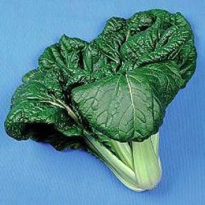 野菜の種/種子 ビタミン菜・ツケナ 8ml(メール便発送)タキイ種苗|vg-harada