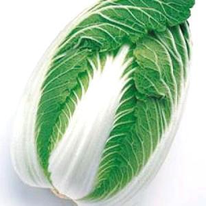 野菜の種/種子 無双・ハクサイ・白菜 ペレット種子 150粒(メール便可能)タキイ種苗|vg-harada