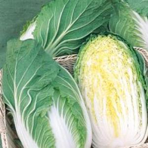 野菜の種/種子 きらぼし65・ハクサイ・白菜 5000粒(大袋)タキイ種苗|vg-harada
