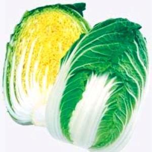 野菜の種/種子 きらぼし77・ハクサイ・白菜 1m(メール便可能)タキイ種苗|vg-harada