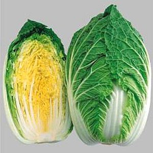 野菜の種/種子 黄ごころ65・ハクサイ・白菜 5000粒(大袋)タキイ種苗|vg-harada