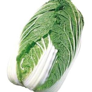 野菜の種/種子 晩輝・ハクサイ・白菜 2.4ml(メール便可能)タキイ種苗|vg-harada