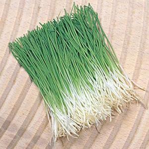 野菜の種/種子 かおり芽ねぎ・ねぎ 1dl袋(メール便発送)タキイ種苗|vg-harada