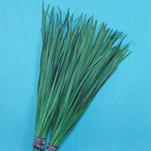 野菜の種/種子 広巾にら・ニラ 1dl(メール便可能)タキイ種苗|vg-harada