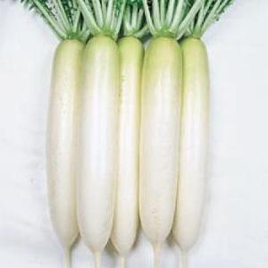 野菜の種/種子 YRくらま・だいこん ダイコン 20ml(メール便可能)タキイ種苗|vg-harada