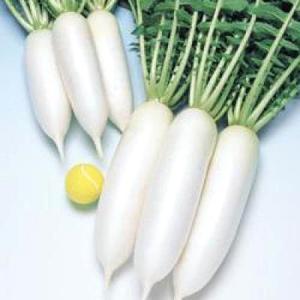 野菜の種/種子 三太郎・だいこん ダイコン 20ml(メール便可能)タキイ種苗|vg-harada