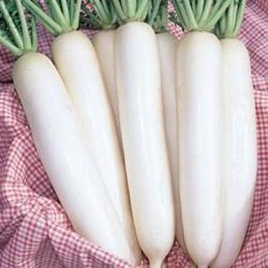 野菜の種/種子 健白・だいこん ダイコン 2dl(大袋)タキイ種苗|vg-harada