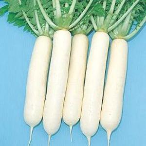 野菜の種/種子 大蔵・だいこん ダイコン 10ml(メール便可能)タキイ種苗|vg-harada