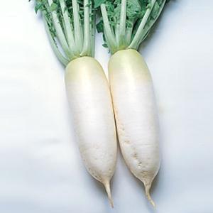 野菜の種/種子 打木源助・だいこん ダイコン 1dl(メール便可能)タキイ種苗|vg-harada