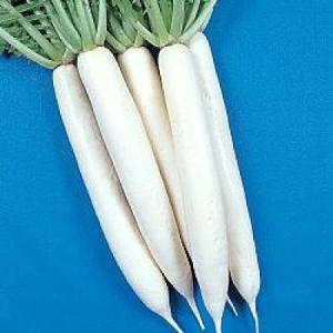 野菜の種/種子 和歌山・だいこん ダイコン 1dl(メール便可能)タキイ種苗|vg-harada