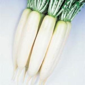 野菜の種/種子 おしん・だいこん ダイコン 20ml(メール便可能)タキイ種苗|vg-harada