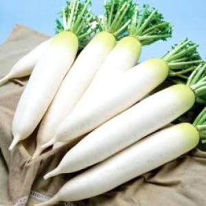 野菜の種/種子 初神楽・だいこん ダイコン 4ml(メール便可能)タキイ種苗|vg-harada