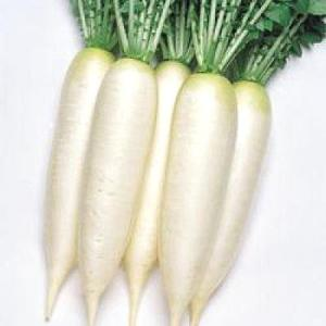 野菜の種/種子 大師・だいこん ダイコン 20ml(メール便可能)タキイ種苗|vg-harada
