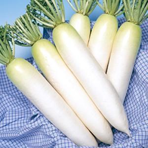 野菜の種/種子 春神楽・だいこん ダイコン 2dl(大袋)タキイ種苗|vg-harada
