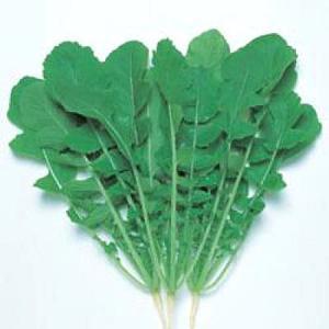 野菜の種/種子 ハットリくん・葉だいこん だいこん ダイコン 2dl(大袋)タキイ種苗|vg-harada