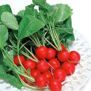 野菜の種/種子 フレンチ・ブレックファスト・紅白二十日ダイコン だいこん ダイコン 1dl(メール便可能)タキイ種苗|vg-harada