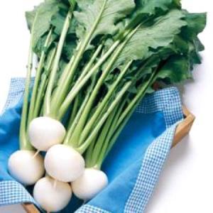 野菜の種/種子 CR白わらべ・カブ 20ml(メール便可能)タキイ種苗 vg-harada