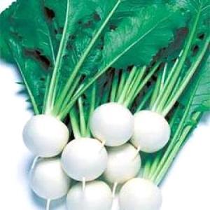 野菜の種/種子 CRもちばな・カブ 1dl(メール便発送)タキイ種苗 vg-harada