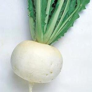 野菜の種/種子 聖護院大丸蕪・カブ 17ml(メール便発送)タキイ種苗
