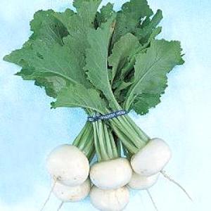 野菜の種/種子 金町小蕪・カブ 1dl(メール便可能)タキイ種苗|vg-harada