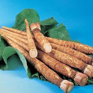 野菜の種/種子 サラダむすめ・ごぼう 13ml(メール便可能)タキイ種苗|vg-harada