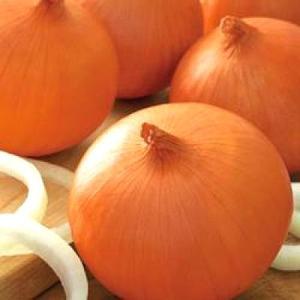 野菜の種/種子 ケルたま・タマネギ 2dl(大袋)タキイ種苗|vg-harada