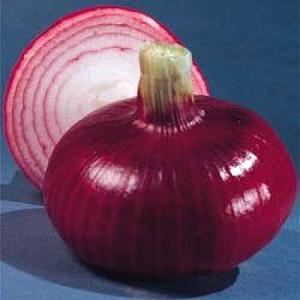 野菜の種/種子 猩々赤・タマネギ 6.5ml(メール便発送)タキイ種苗|vg-harada