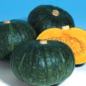 野菜の種/種子 ほっこり133・カボチャ 100粒(メール便可能)タキイ種苗|vg-harada