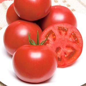 野菜の種/種子 CFハウス桃太郎・トマト 1000粒(メール便可能/大袋)タキイ種苗|vg-harada