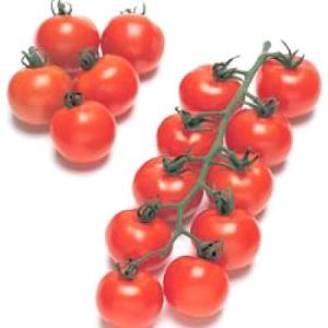 野菜の種/種子 フルティカ・トマト 1000粒(メール便発送/大袋)タキイ種苗|vg-harada