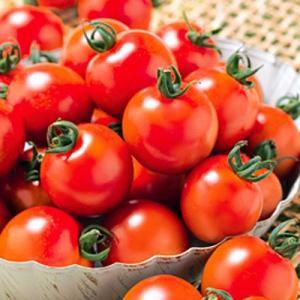 野菜の種/種子 千果99・トマト 14粒(メール便発送)タキイ種苗|vg-harada