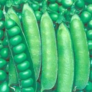 野菜の種/種子 ウスイ・えんどう 1L(大袋)タキイ種苗|vg-harada