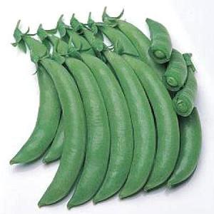 野菜の種/種子 グルメ・えんどう 1L(大袋)タキイ種苗|vg-harada