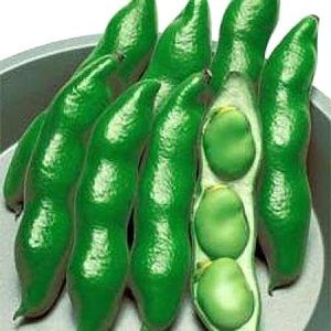 野菜の種/種子 仁徳一寸・そら豆 1dl(メール便可能)タキイ種苗|vg-harada